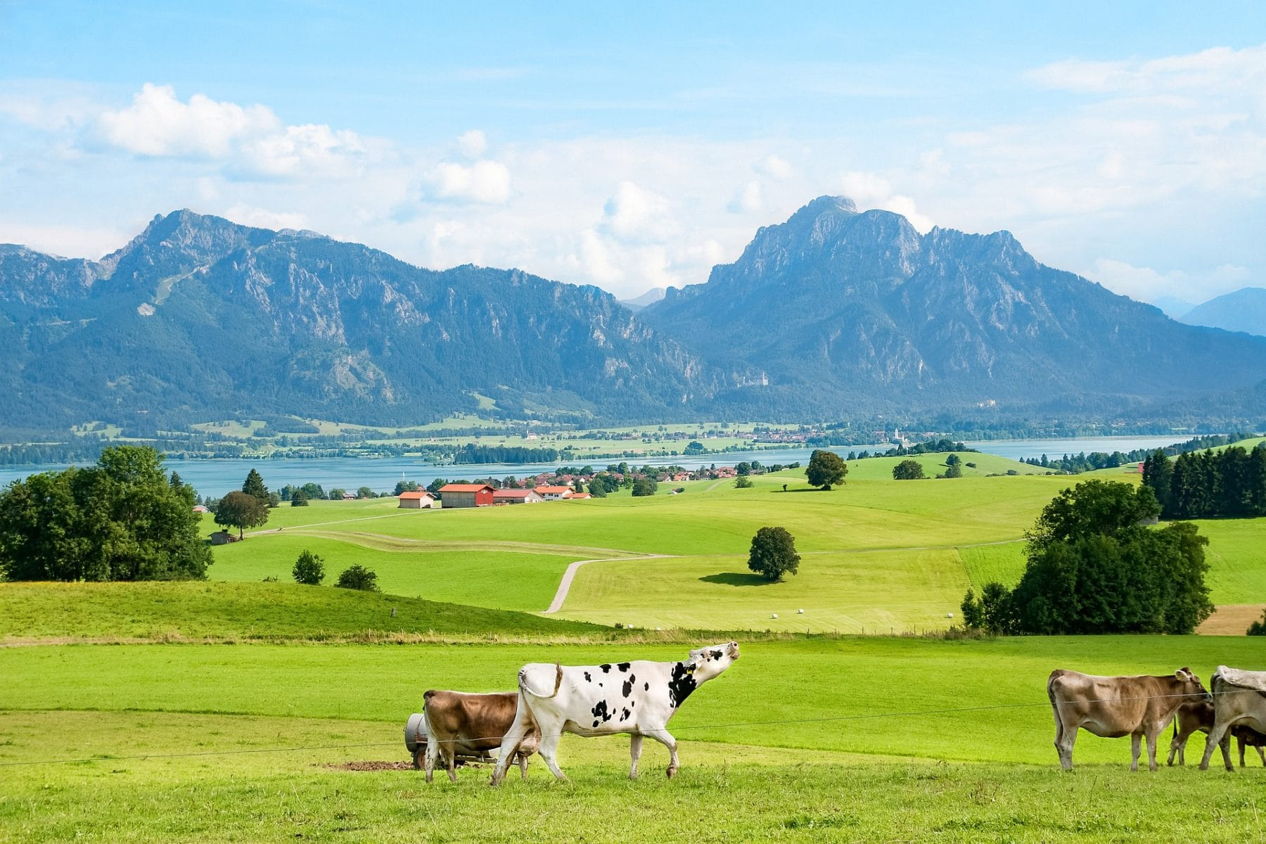 Bild Ostallgäu