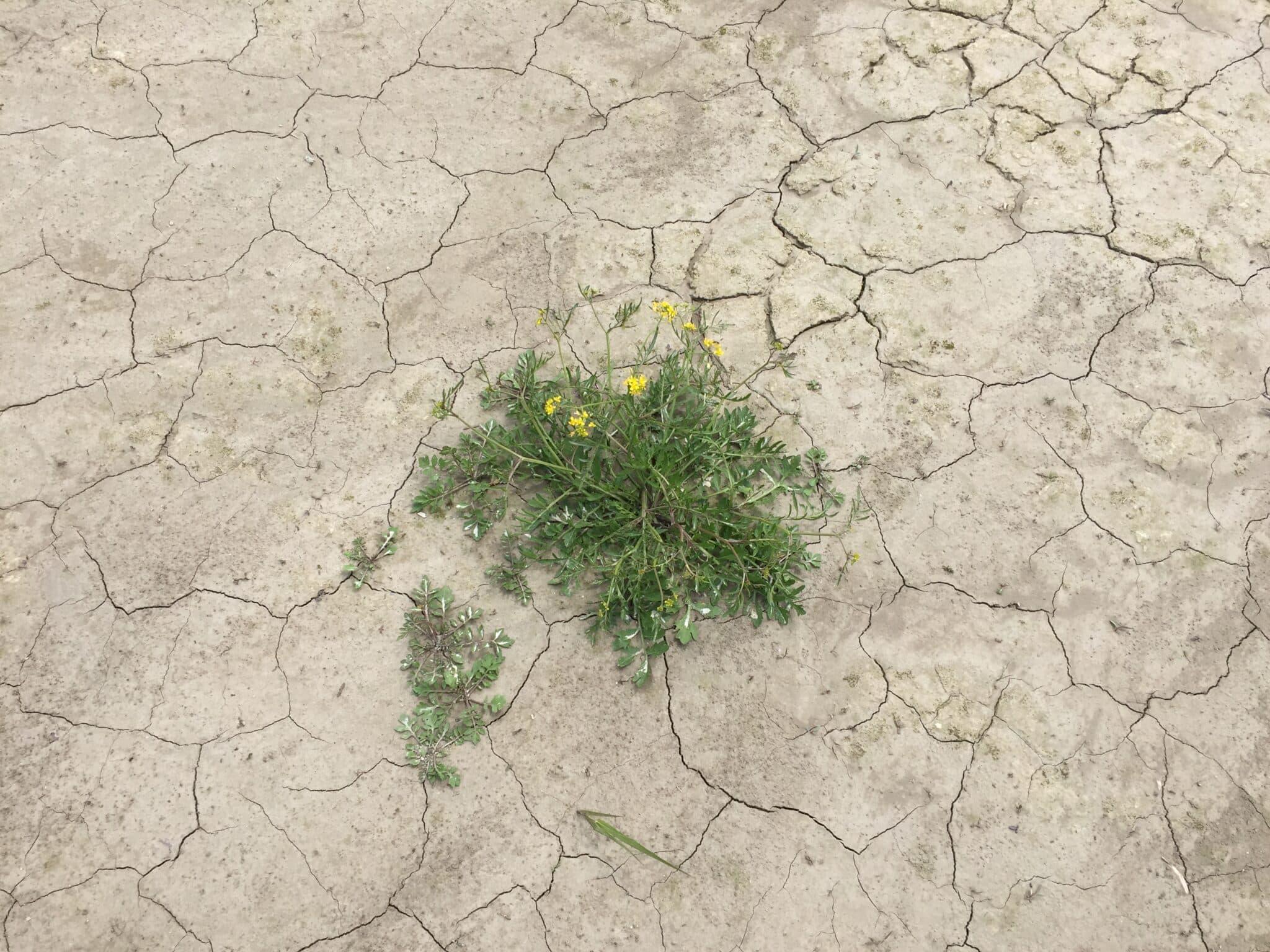 Foto Klimaanpassung